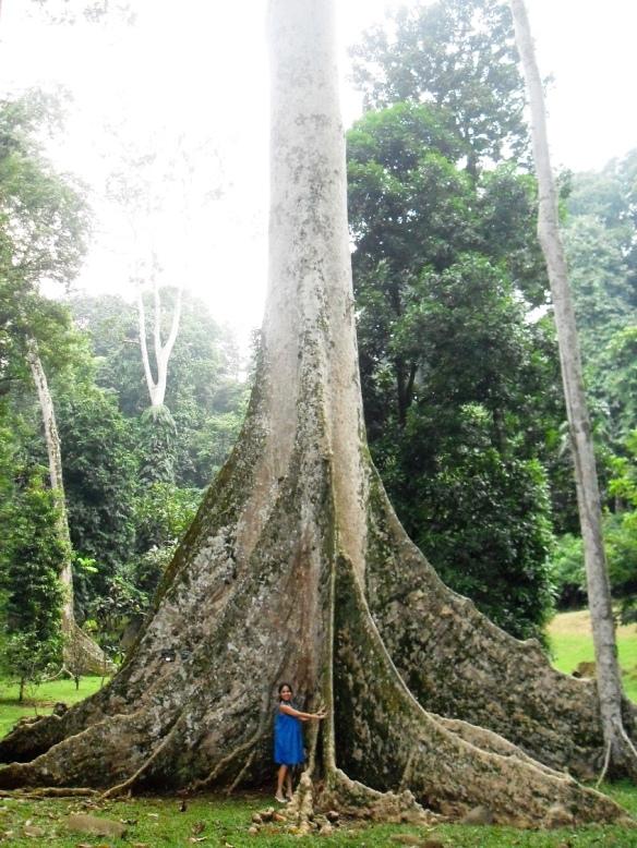 O Dear Giant Tree How I Love Thee