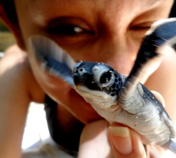 Derawan Island - Baby Turtle