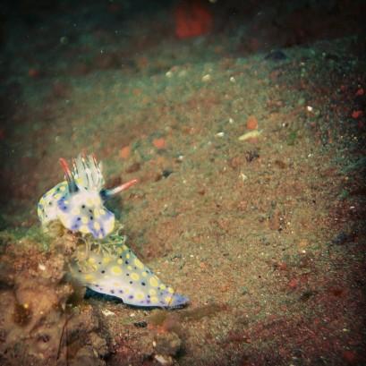 Nudibranch - Lolo's underwater photo
