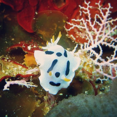 Nudibranch by Lolo Sianipar