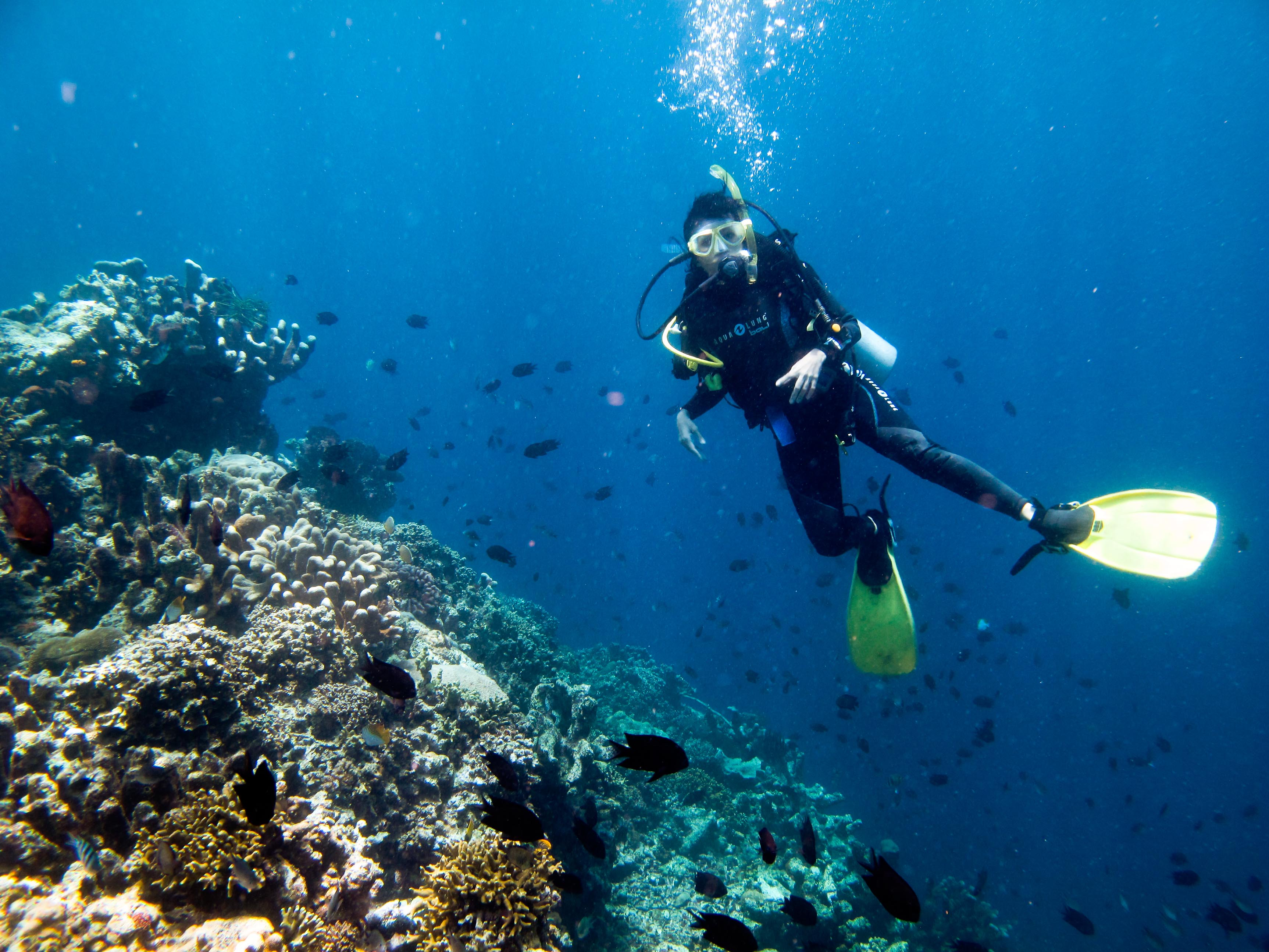 scuba diving | For the Remembrance