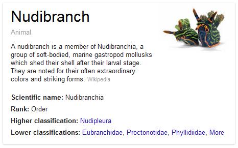 Nudibranch Explanation